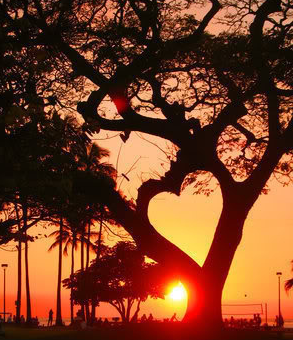 heart_sunset_tree