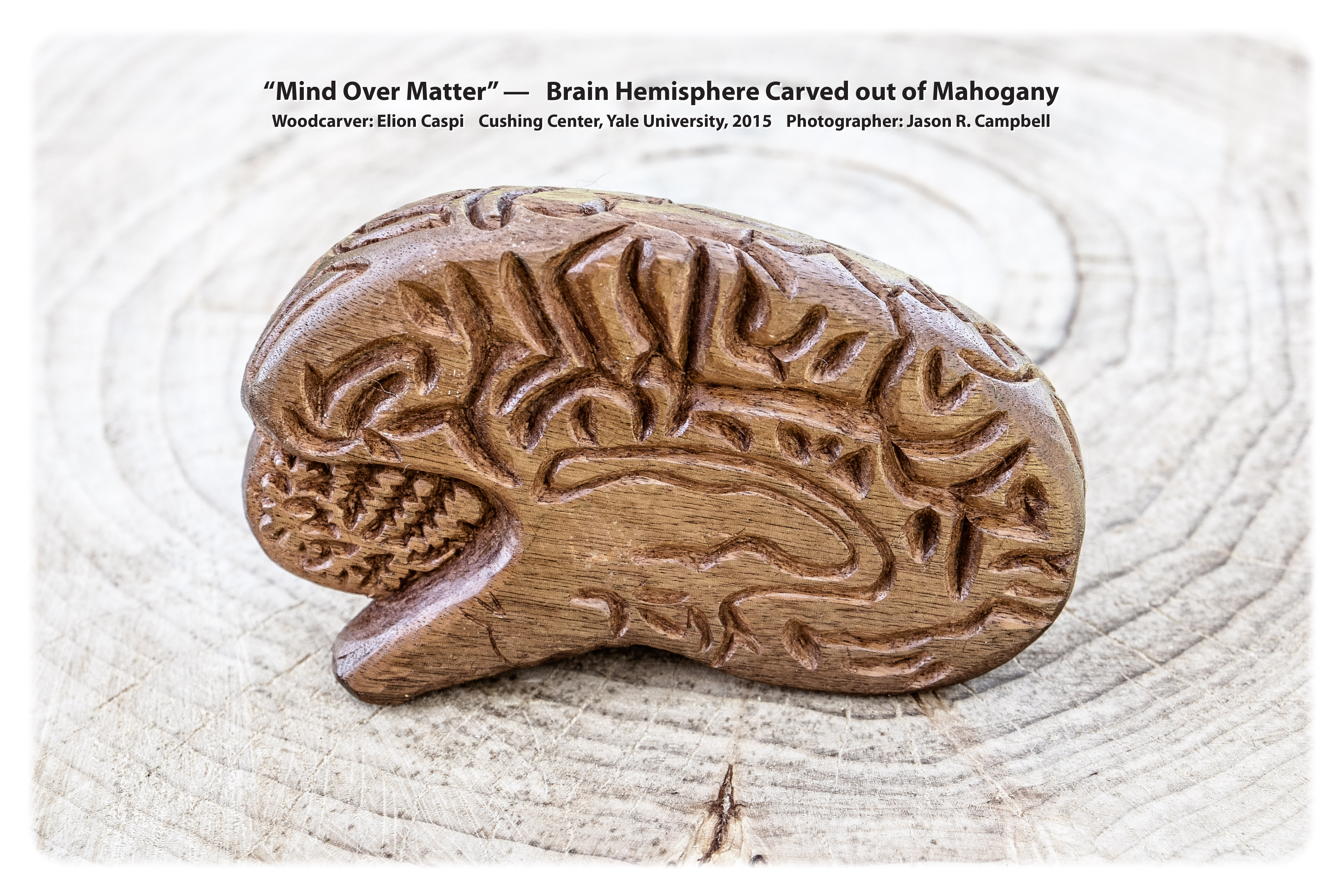 Eilon Mind Over Matter - Image of Brain Hemisphere - with caption - Final (3)