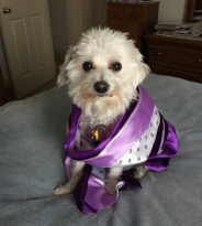 mary_howard_dog_princess