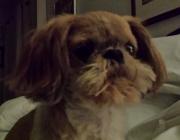 susans_dog_oscar